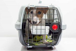 acompanhe nosso blog transporte animais
